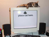 Place Cat Here