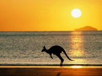 kangaroo on the beach in the sunset