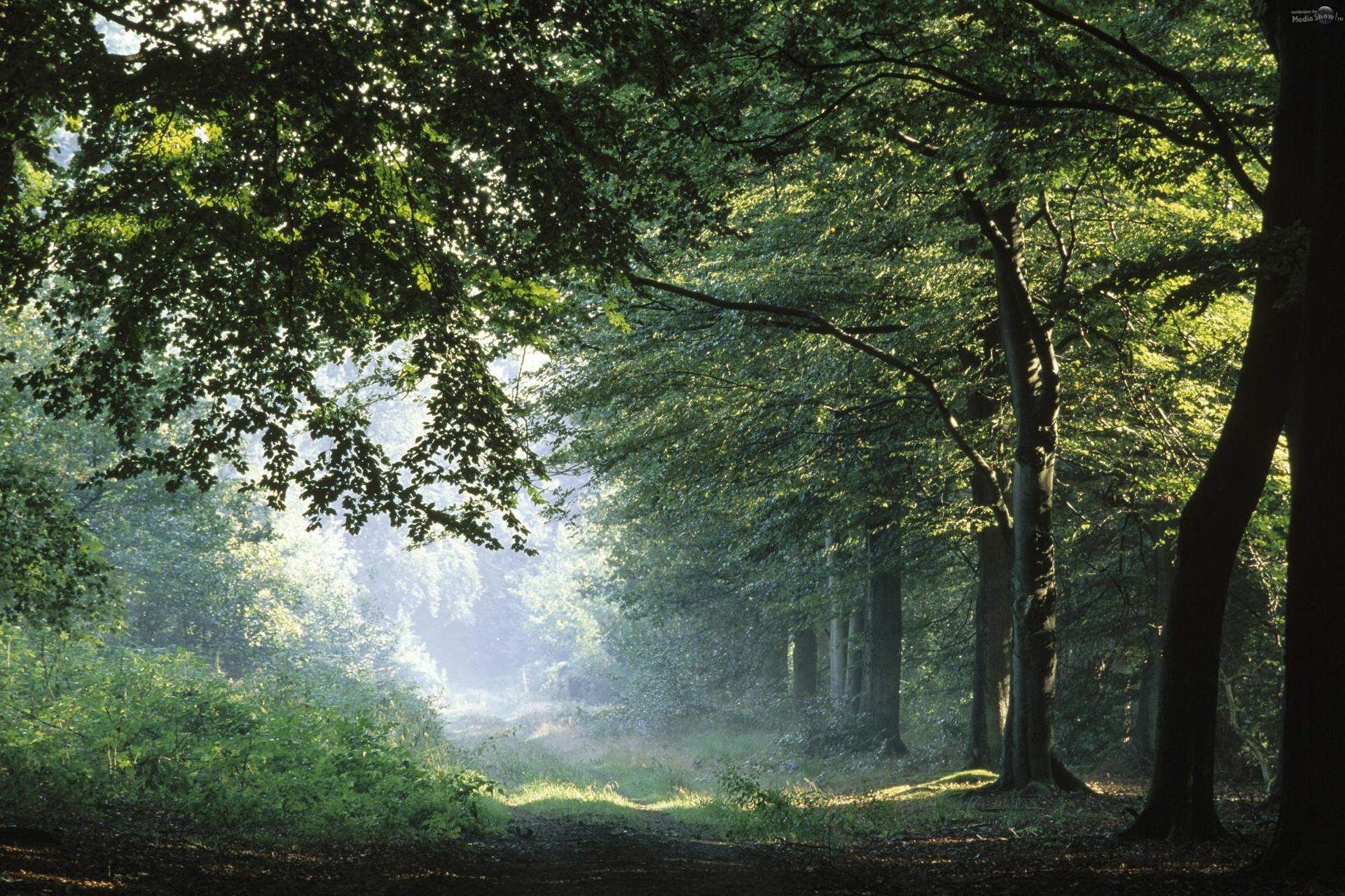 http://www.mediashow.ro/show/140653-5/Springtime-Forest-Germany.jpg?rndm=pixcynky