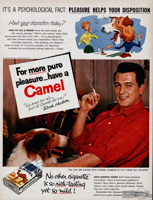 Camel-Pleasure-Helps-Your-Disposition
