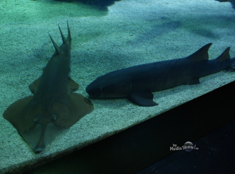two-different-sharks