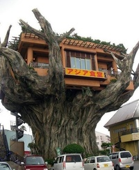 Tree House Restaurant in China