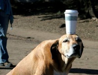 dog-magic-cup