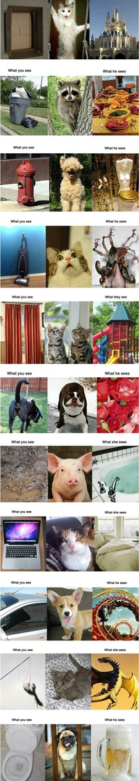 What you see vs. what animals sees