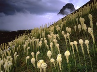 Blooming Beargrass and a Clearing Storm