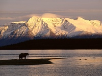 Alaskan Brown Bear Silhouetted Against Mount Katolinat